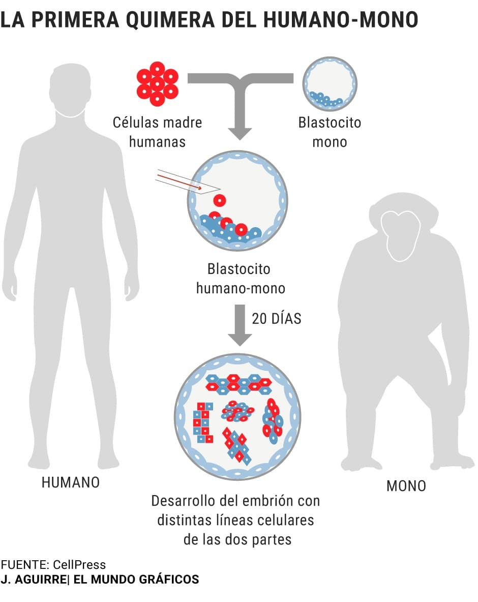 infografia-elmundo