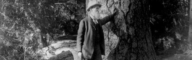 John Muir junto a los árboles, símbolo del misterio del hombre en relación con la Creación