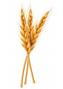 unidad necesita que seamos verdadero trigo rel